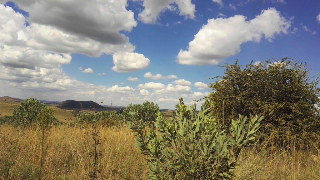 The breathtaking savannah views