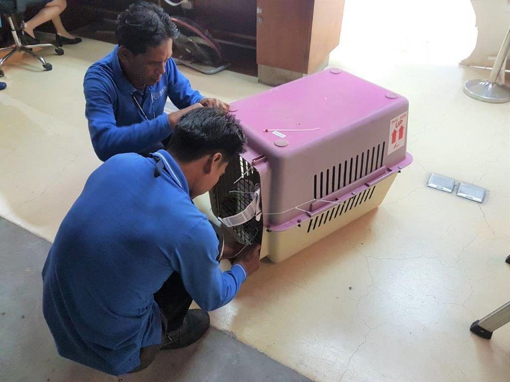 Airport workers making sure Chase's crate stays sealed