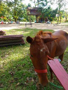 Pony at Eurphon yard