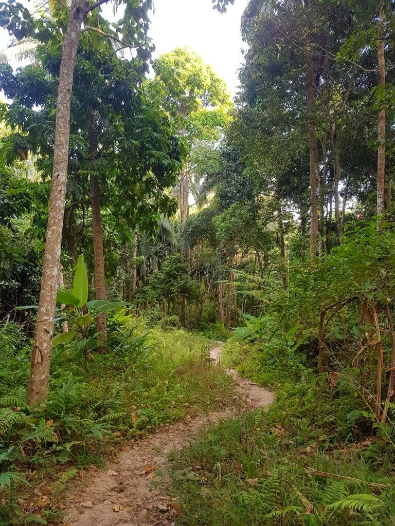 Beautiful jungle view along the trail