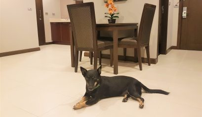 Chase the dog in the kitchen of Mercure Asoke hotel