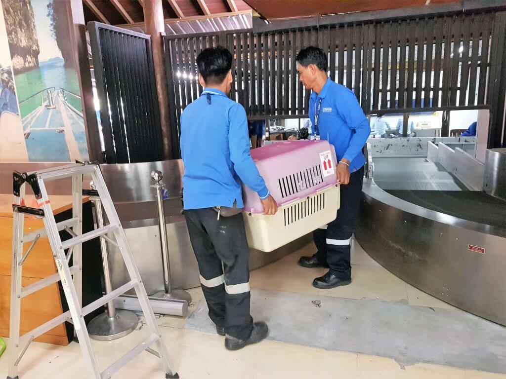 Two workers carrying Chase in a crate