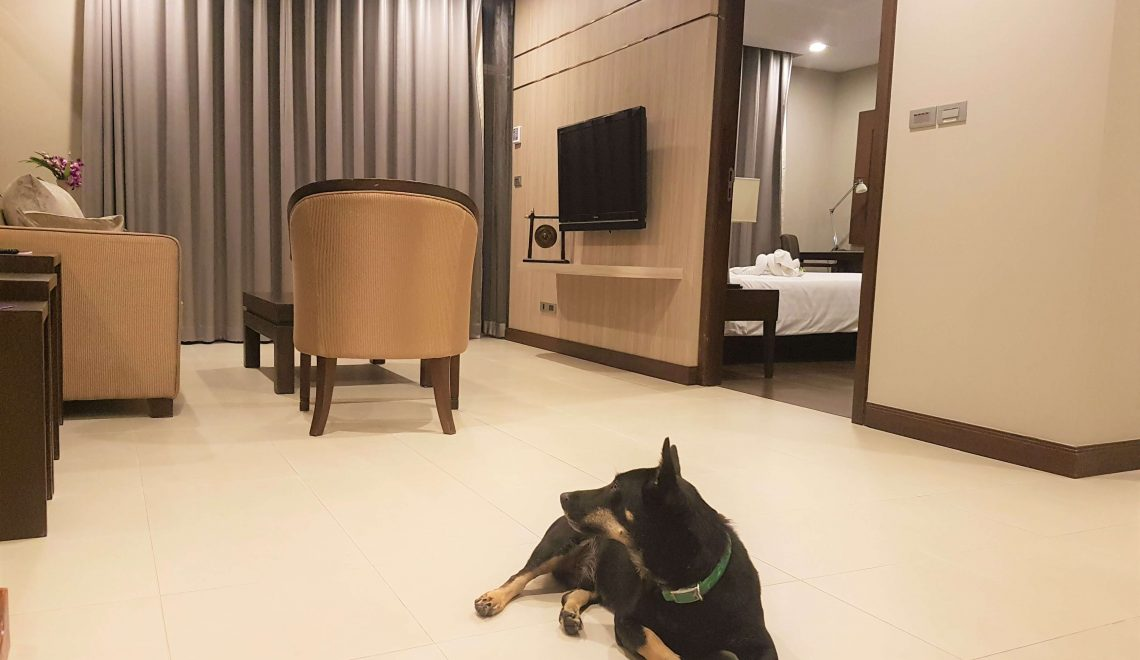 Grand Mercure Asoke – One of the Best Dog Friendly Hotels Bangkok Has to Offer