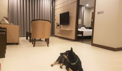 Chase lying in the livingroom of one of the best dog-friendly hotels Bangkok has to offer