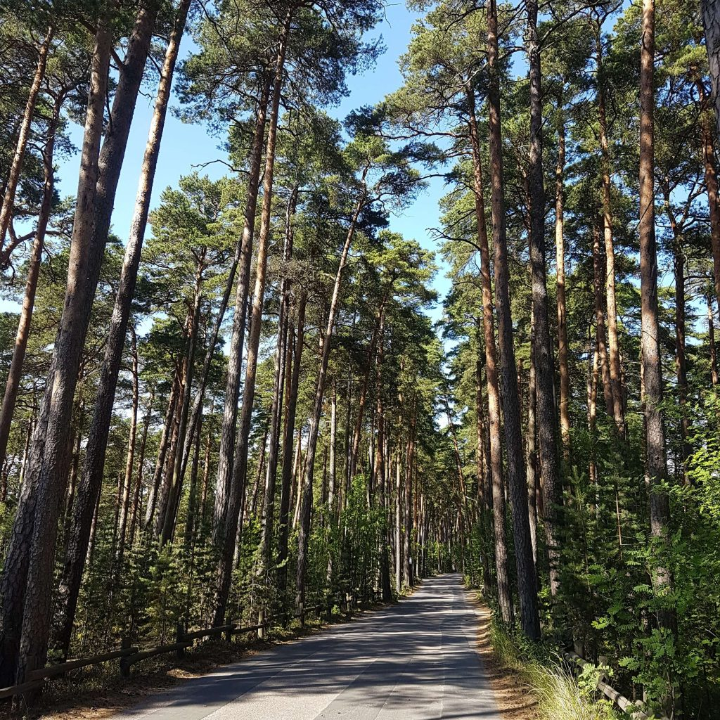 The beautiful Kallahti pine forest