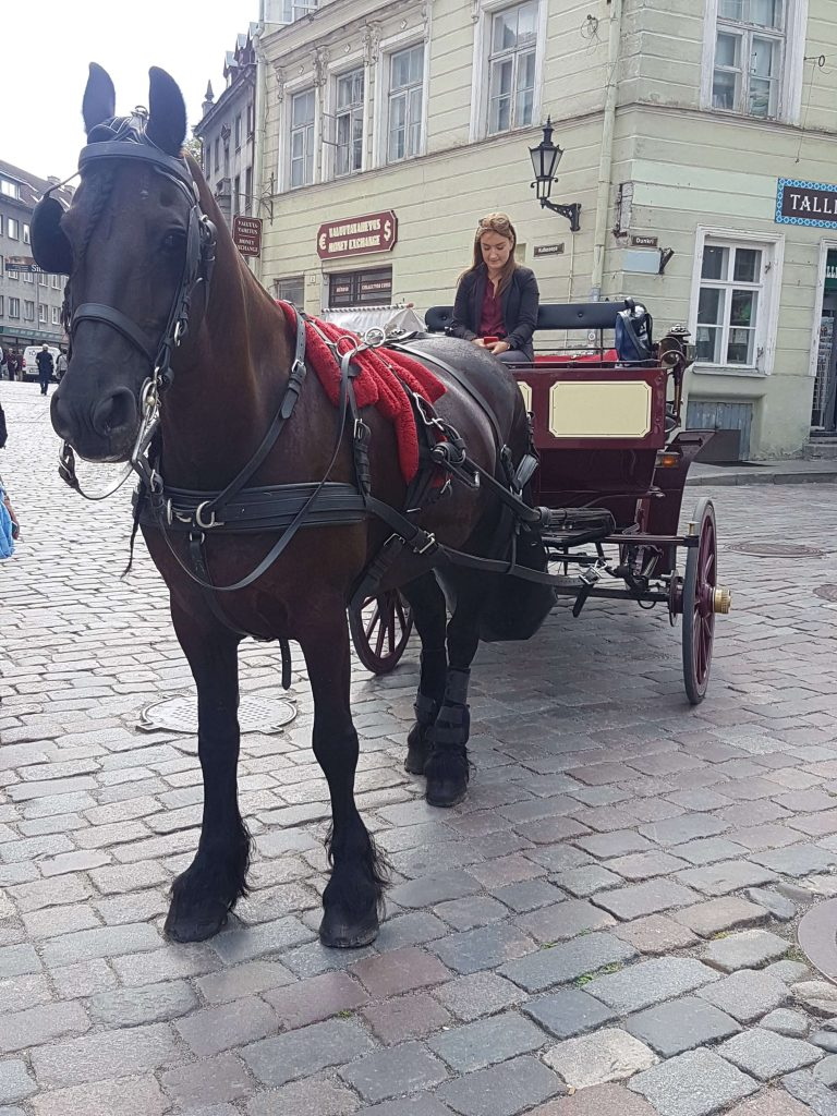 If you are still wondering what else to do in Tallinn, try a horse carriage ride in the Old Town of Tallinn