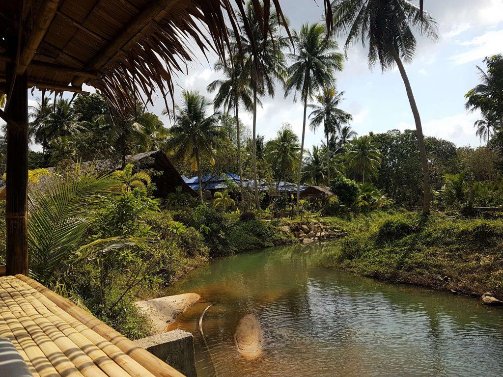 A stream against a tropical view